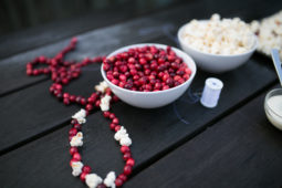 CRANBERRY STRINGING & SNACKING